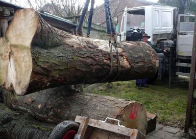 De bomen worden gebracht